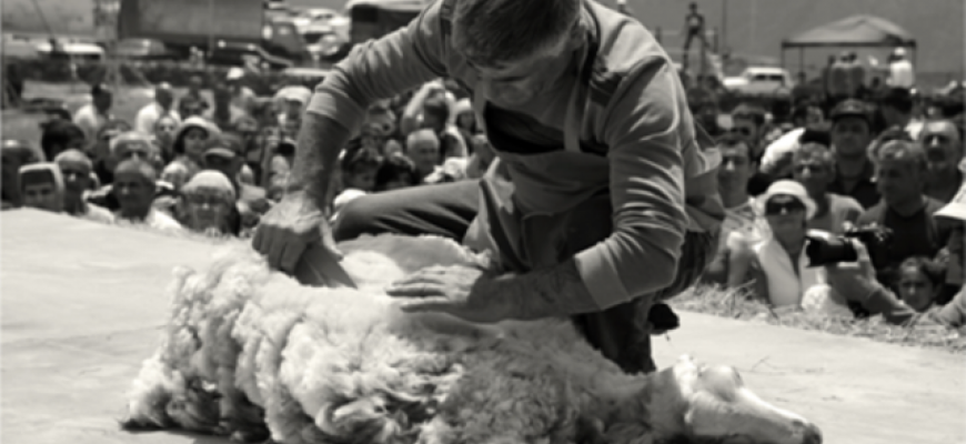 SHEEP SHEARING FESTIVAL – 2018